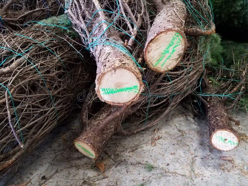 Julpinjeträd som är bundna av gröna markeringar arkivbilder