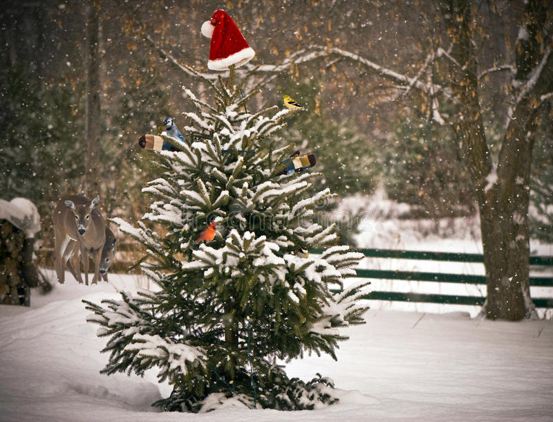 Julplats. arkivfoto