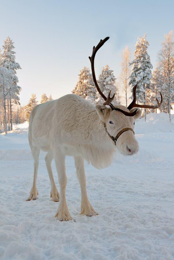 julren arkivbilder