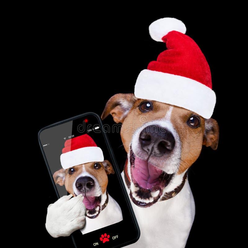 JulSanta Claus hund som isoleras på svart selfie arkivfoto