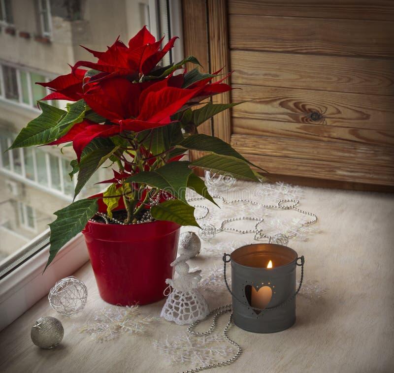 Julstjärna (Euphorbiapulcherrima) på fönstret. Advent arkivfoton