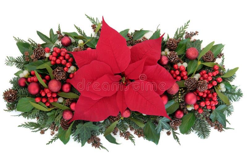 Julstjärnablommaskärm royaltyfria foton