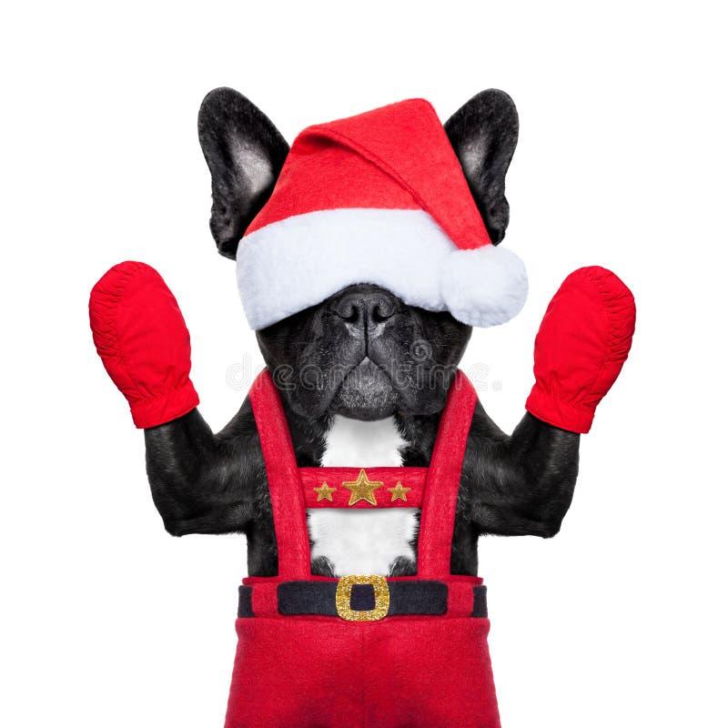 Jultomtenhund arkivbilder