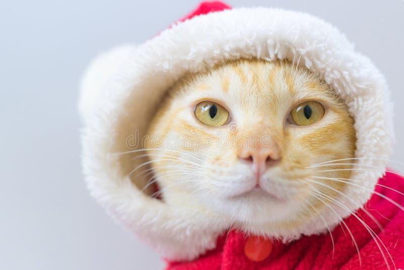 Jultomtenkatt i jultema arkivbilder