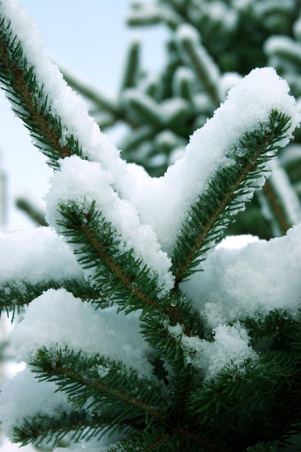 Download Jultree arkivfoto. Bild av snow, blitzkrieg, nordligt, xmas - 516272