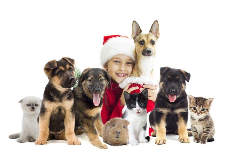 Juluppsättning av husdjur royaltyfri foto