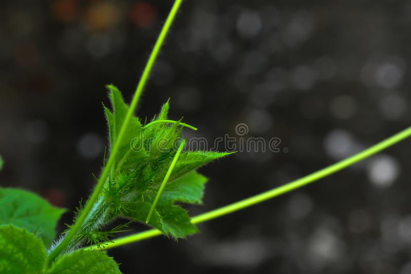 July is a biennial plant that likes the moist soil. When looking at the top of the tree, July will see the short and small feathers in general royalty free stock photo