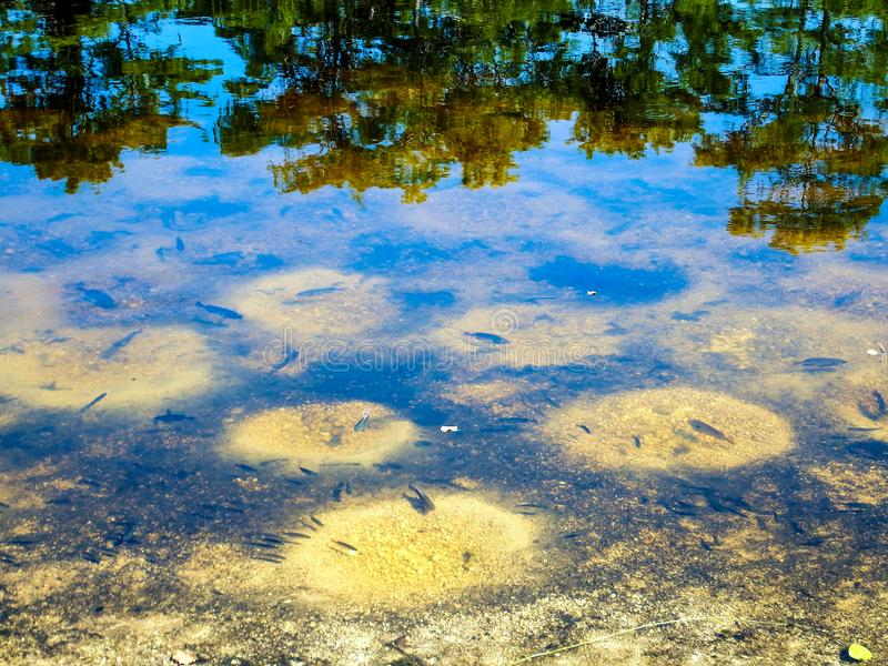 July fish spawn in a south Florida wetland royalty free stock photo