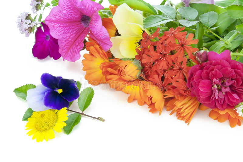 Download July Flowers Royalty Free Stock Photography - Image: 20416407