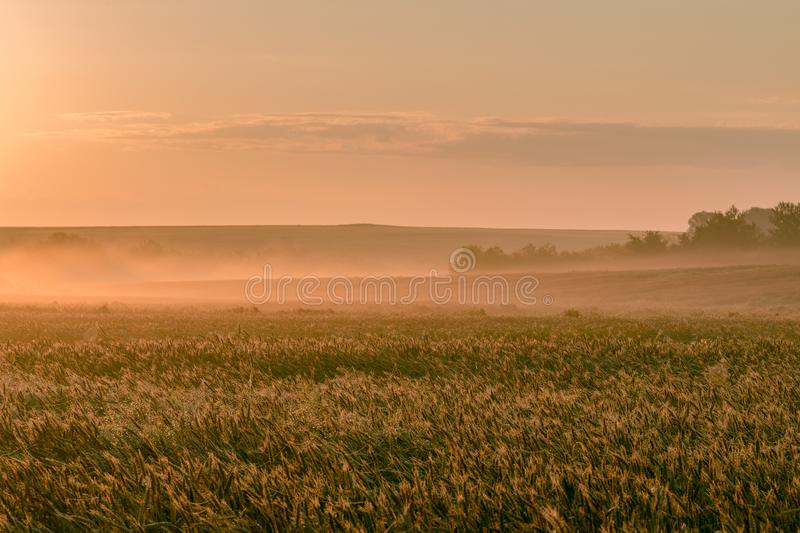 July morning dawning over a wheat field stock image
