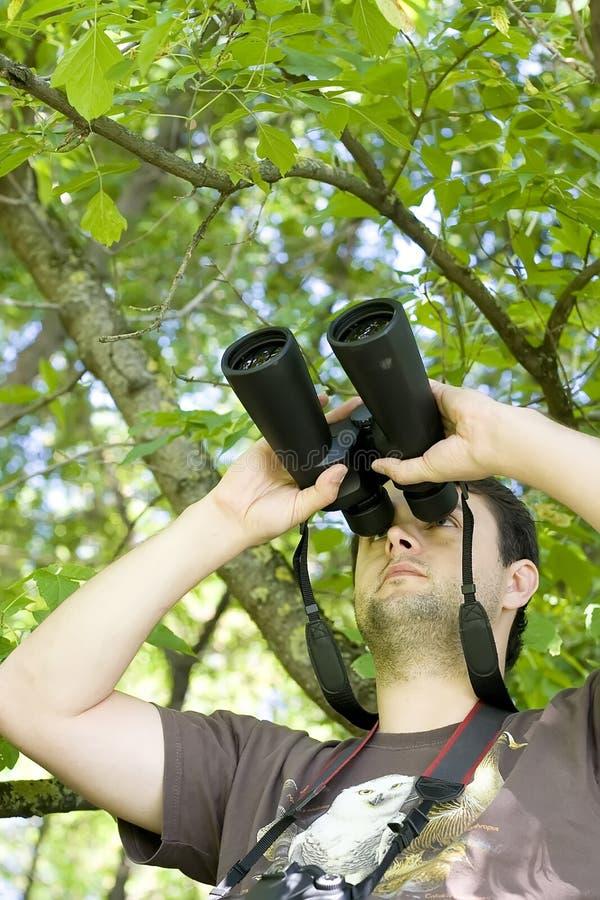 Jumelles de fixation d'observateur de jeune oiseau images stock