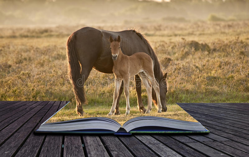 Jument et poulain neufs de poney de forêt dans le livre magique images libres de droits