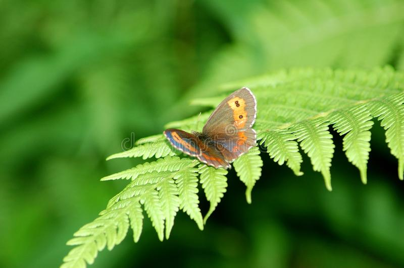 Butterfly wings stock image