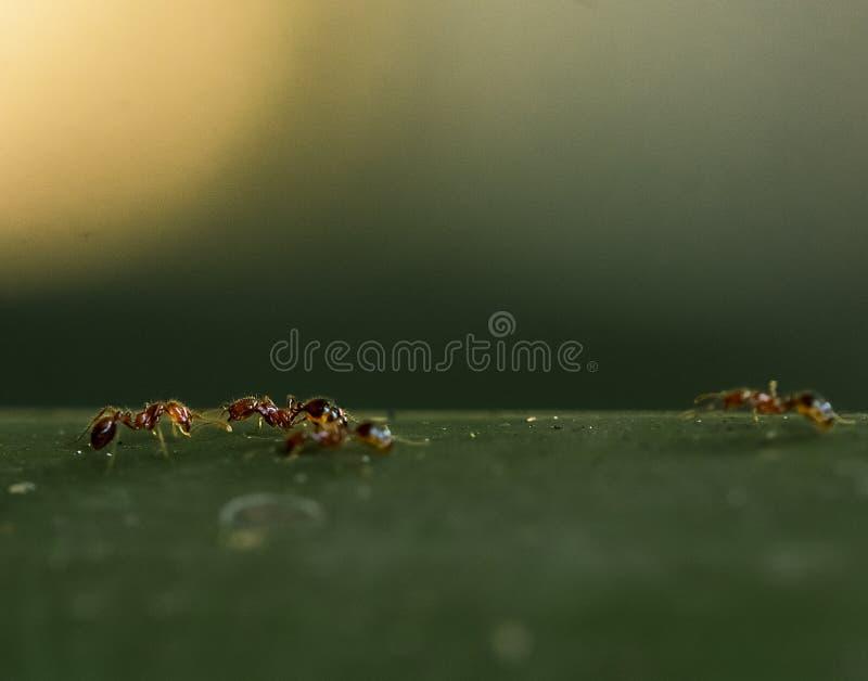 Jumper branco de aranha fotos de stock