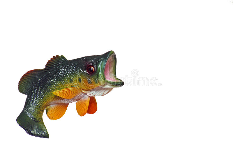 Jumping bass stock image image of large bass water for Dream about fish out of water