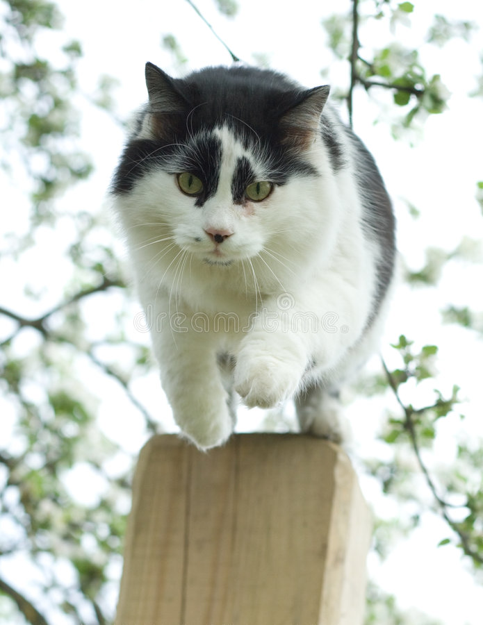 Download Jumping Cat Stock Photography - Image: 2465202