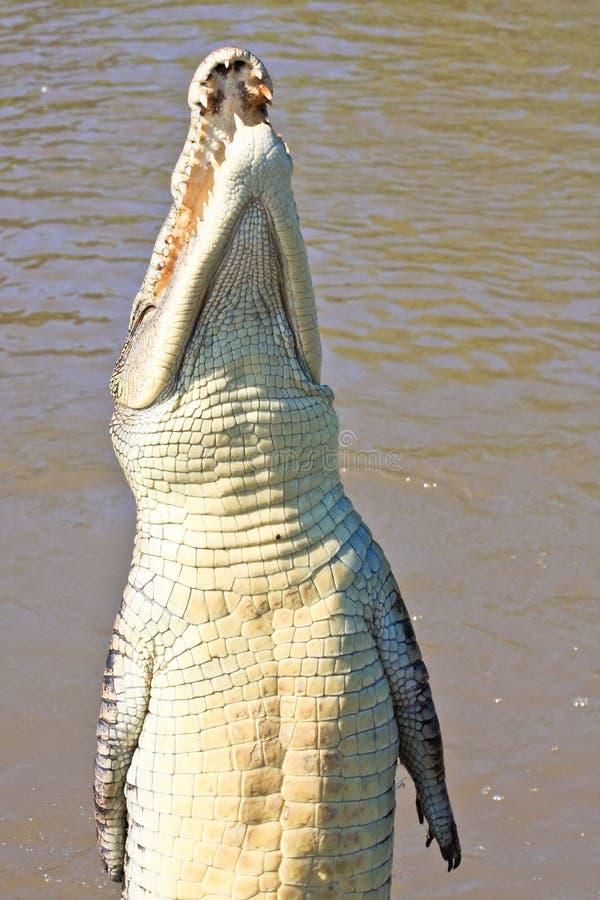 Jumping Crocodile stock image