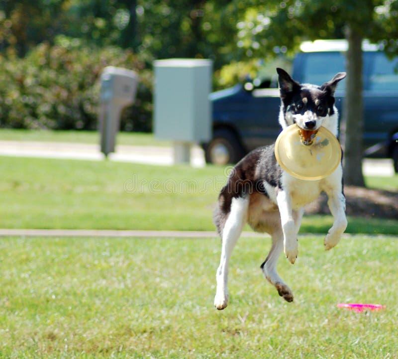 Jumping Dog Free Stock Photo