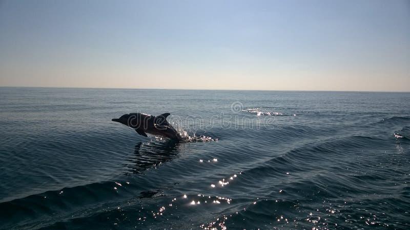 Jumping dolfijn stock fotografie