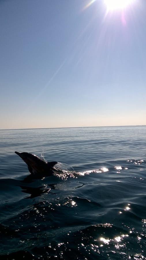 Jumping dolfijn royalty-vrije stock afbeeldingen