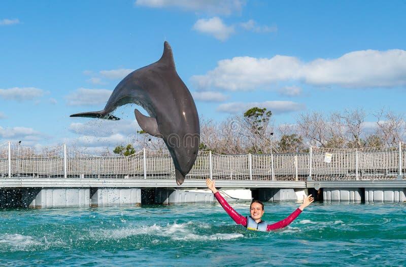 Jumping dolfijn Vrouw die met dolfijnen in blauw water zwemmen royalty-vrije stock afbeeldingen
