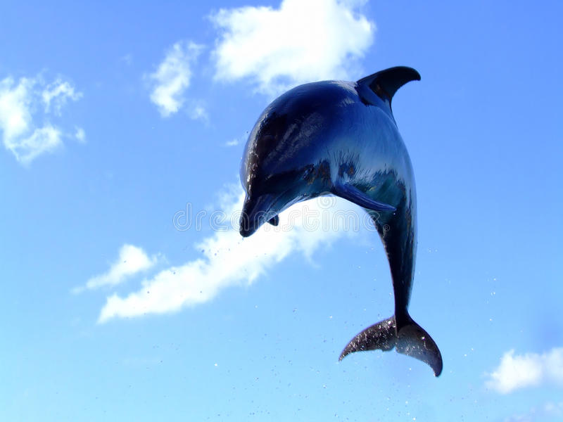 Download Jumping dolphin stock photo. Image of animals, game, dolphins - 13184622