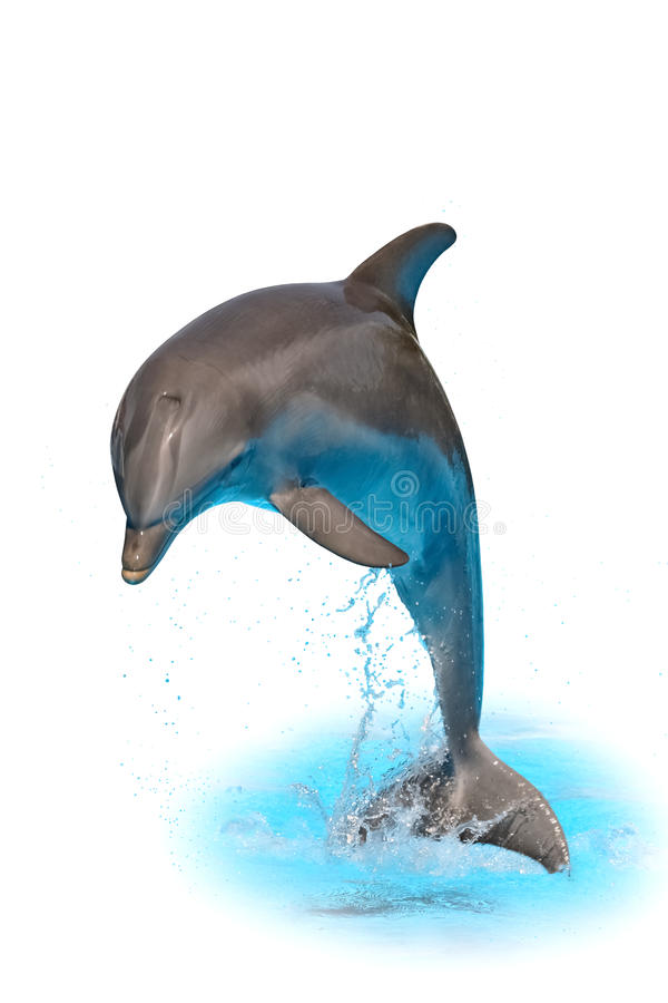 Jumping dolphin isolated on white background with water and spray stock illustration