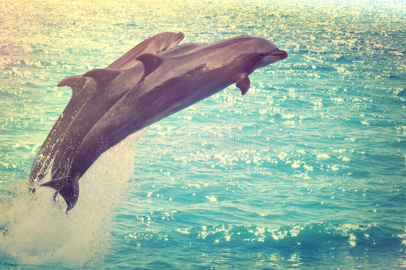 Jumping dolphins. Against the background of the sea royalty free stock images