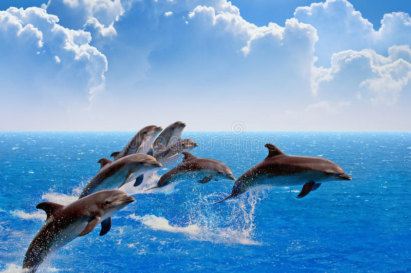 Jumping dolphins royalty free stock image