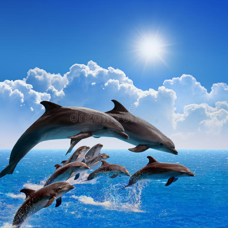 Jumping dolphins. Blue sea and sky, white clouds, bright sun royalty free stock image