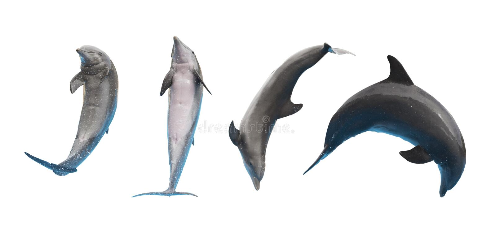 Jumping dolphins on white. Row of jumping and leaping dolphins isolated on white background stock photo