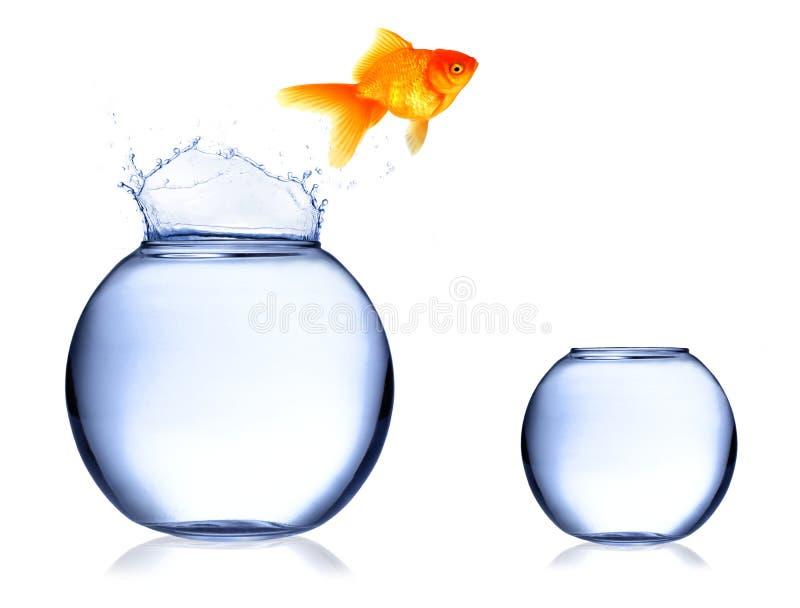 Download Jumping fish stock image. Image of fish, concept, aquarium - 16683121