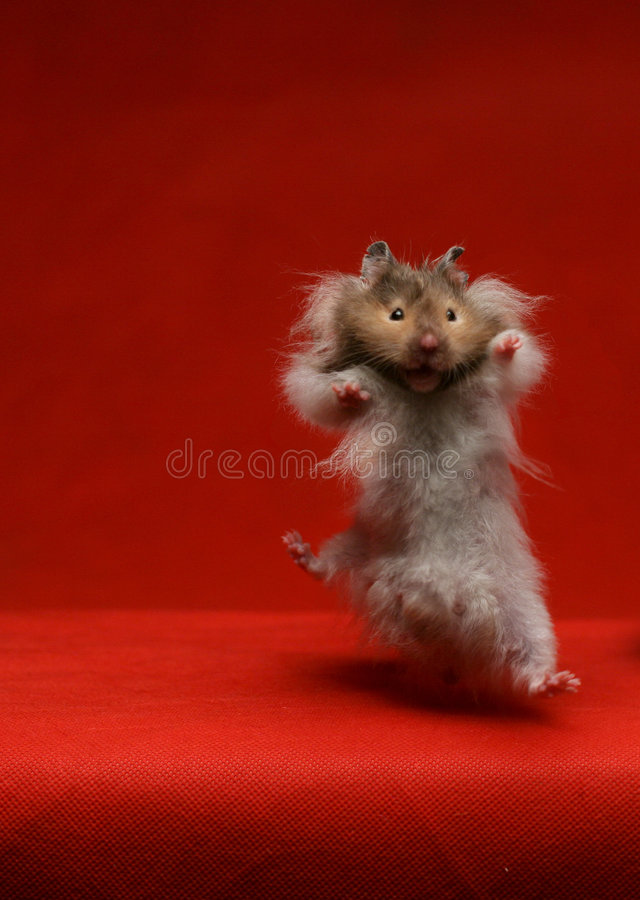 Jumping  Hamster - Mouse Stock Photos