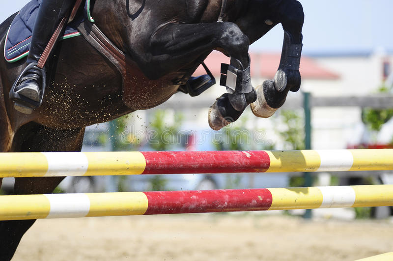 Jumping horse royalty free stock image