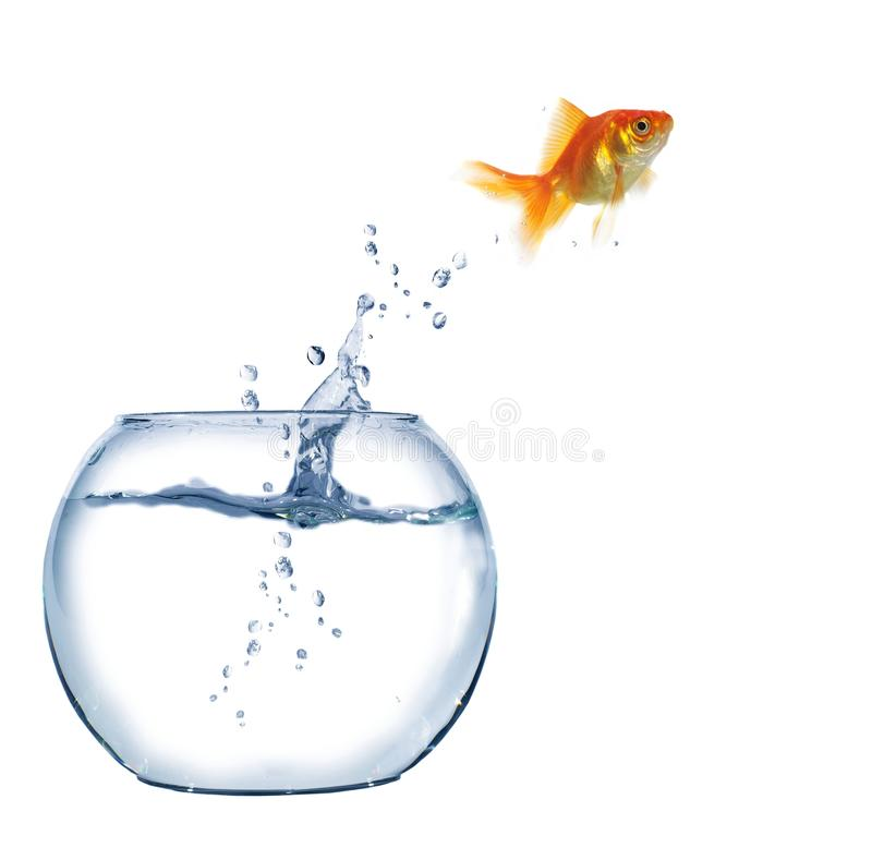 Jumping out fish from aquarium. On white background