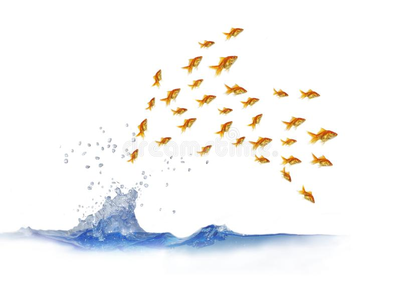 Jumping Out Shoal Royalty Free Stock Photo