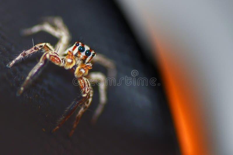 Jumping Spider on Modern Backgroun stock photos