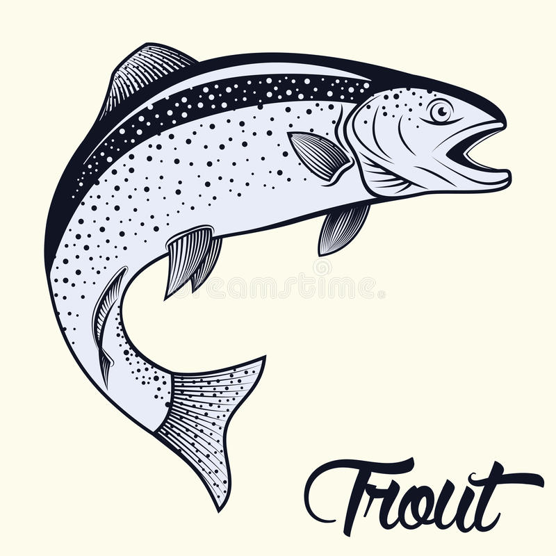 Jumping trout isolated. Monochrome illustration of jumping trout isolated on white background, vector vector illustration