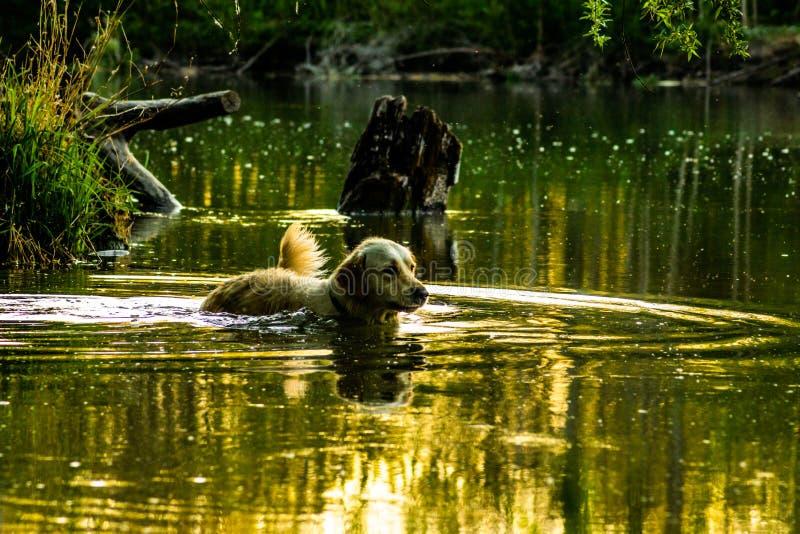 Jumpster no rio - natação diária imagem de stock royalty free