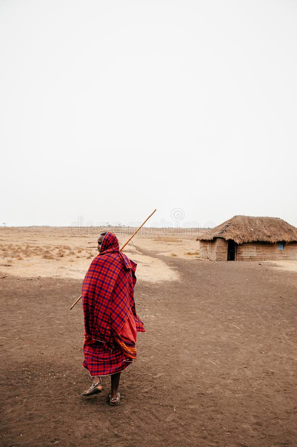Masai or Maasai tribe man in red cloth in empty golden dusty land. Ngorongoro Consevation, Serengeti Savanna forest in Tanzania stock photos