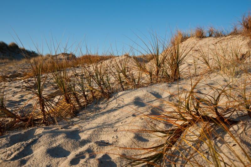 Junco de Sandunesand, cena da praia de Papamoa. fotografia de stock