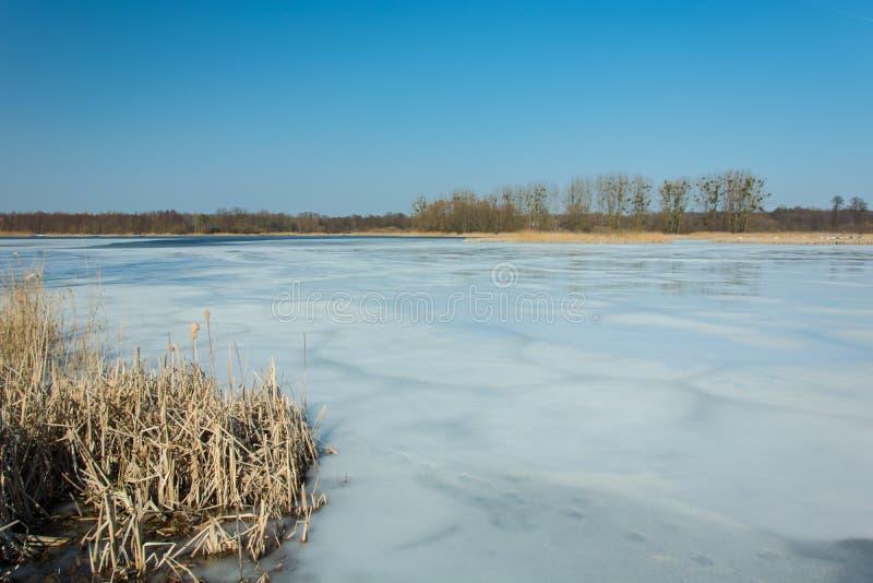 Juncos e neve na costa de um lago congelado Árvores no horizonte e no céu azul imagens de stock