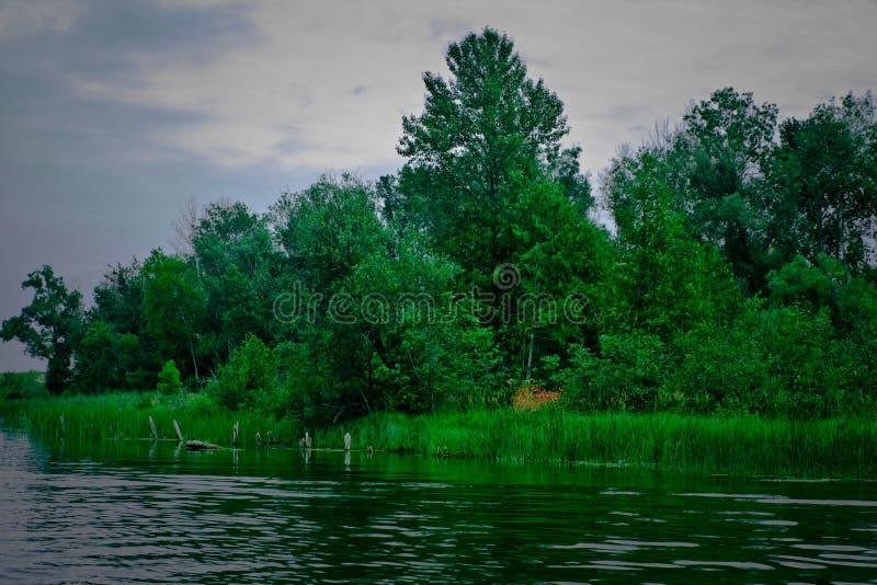 Juncos em um lago 2 Michigan foto de stock royalty free