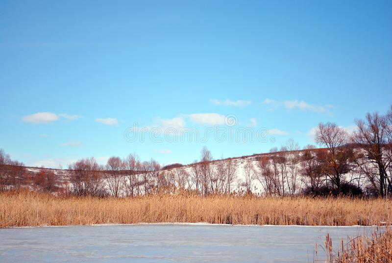Juncos secos amarelos no lago coberto com o banco do gelo com as árvores de salgueiro sem as folhas cobertas com a neve, céu nebu imagem de stock royalty free