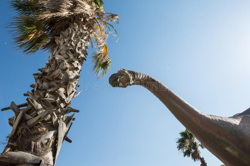 CABAZON, CALIFORNIA: A brontosaurus statue looks up to the sky, with palm tree in photo. CABAZON, CALIFORNIA: A brontosaurus statue looks up into the sky at the royalty free stock photography