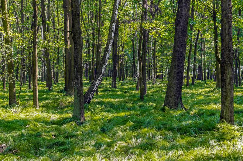 June forest in the summer. stock images