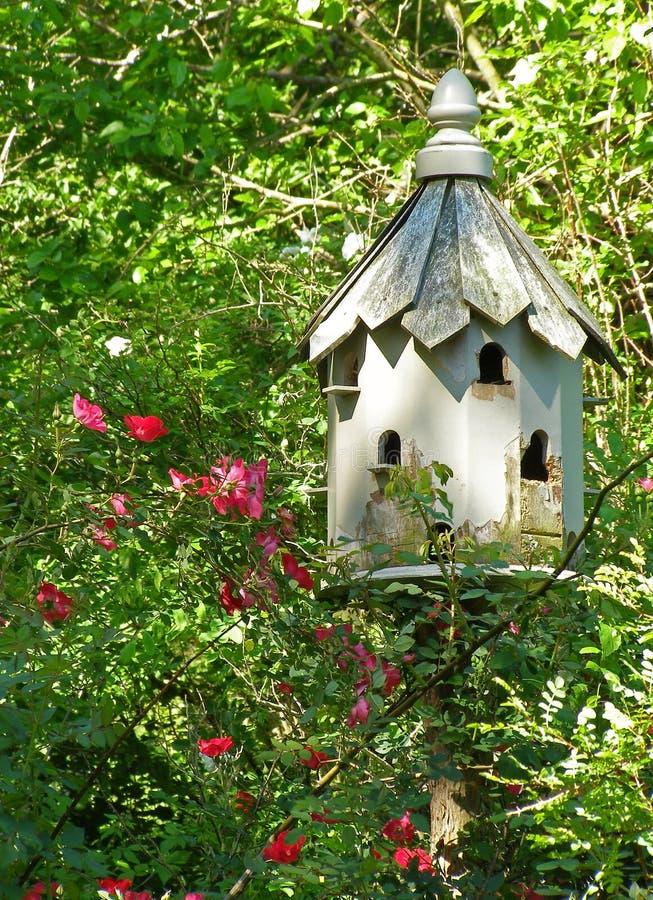 Download June Garden stock photo. Image of avian, roof, bird, protection - 867068