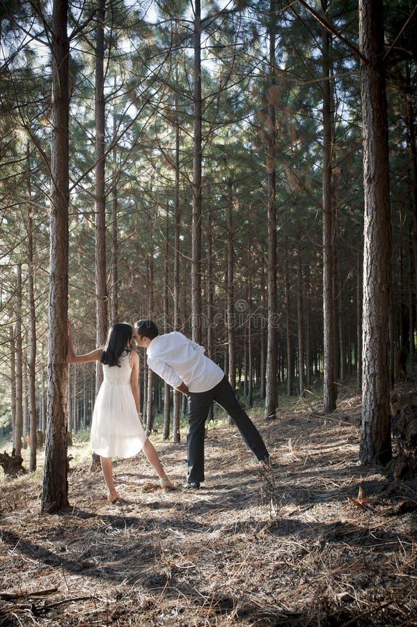 Junge attraktive indische Paare, die im Wald küssen stockbilder