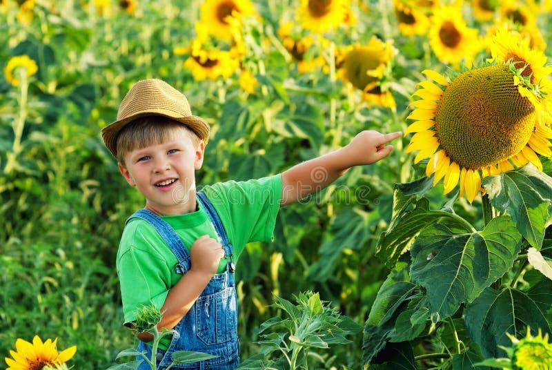 Junge auf einem Weg auf dem Gebiet mit Sonnenblumen lizenzfreie stockfotos