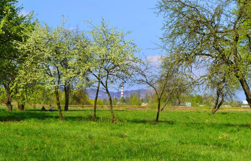 Junge Bäume stockbild